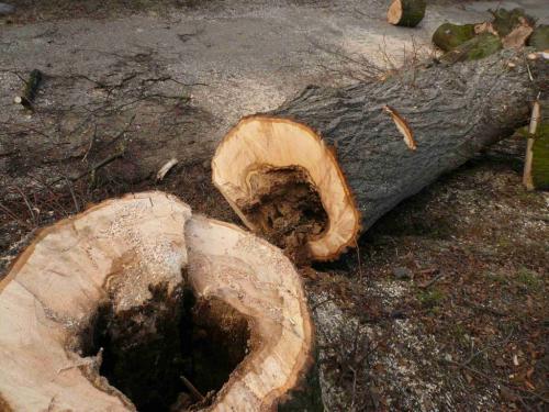 Dřevo bylo zvelké části nepoužitelné